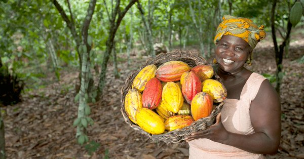 Low Cocoa Prices Cripple Ghana
