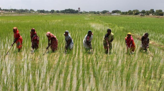 Image result for picture of rice farmers during planting season for rice