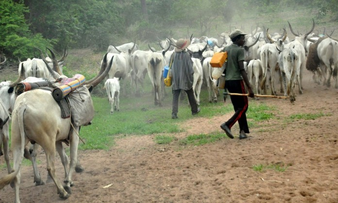 Image result for Cattle breeders lament attack by Southern Kaduna natives